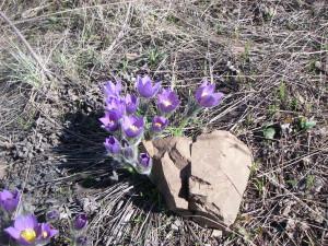 Весна. Аркаим, Первые цветы